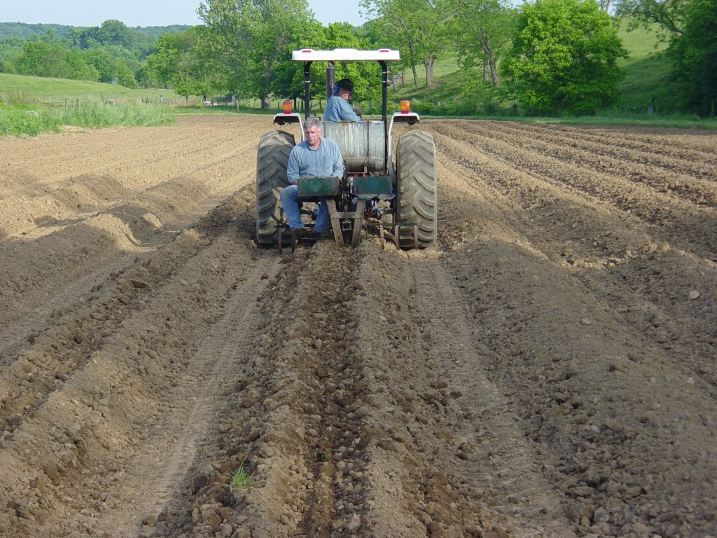 Transplanting bare root strawberries with an old tobacco setter. April 2002